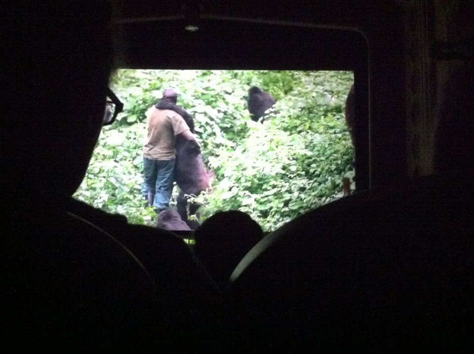 Virunga film, Andre Bauma prowadzi sieroty goryli